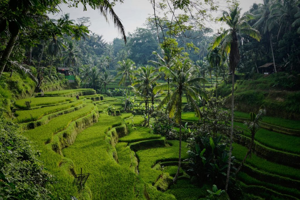 What are the great things from Ubud